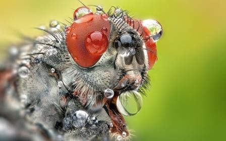 Đồ sâu bọ không hề xấu xí mà lại còn đầy màu sắc với góc chụp cận cảnh mới lạ