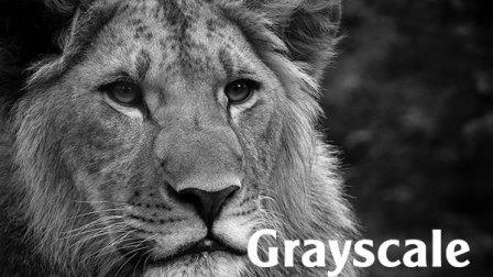 Hệ màu grayscale trong Photoshop